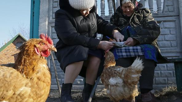 A local resident (R) looks through a ballot brought by an election commission member (L) during a parliamentary election, with a chicken seen nearby, near her house in the village of Havronshchyna near Kiev, October 26, 2014. Ukrainians voted on Sunday in