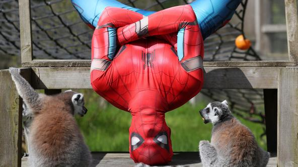 Spiderman, Blair Drummond Safari Park