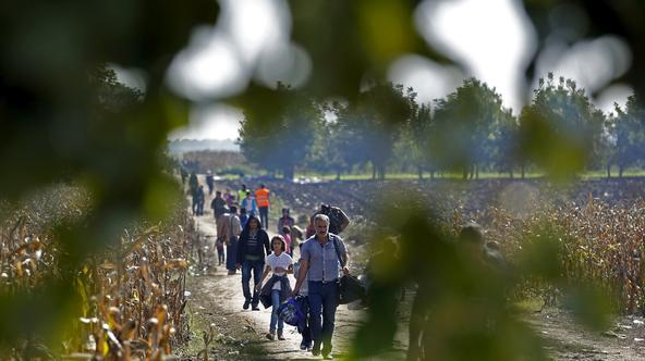 Migrants pass a cornfield as they walk to cross the border into Croatia, near Sid, Serbia, October 3, 2015.