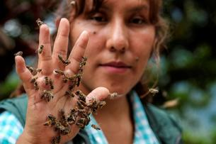 Cynthia Callizaya shows bees on her hand at her bee sanctuary Las Orquideas Ecoparque in Cotapata, Yungas
